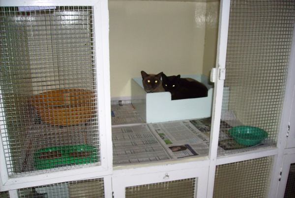 Pusshaven Cattery